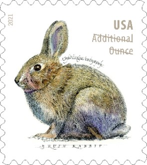 Brush Rabbits stamp